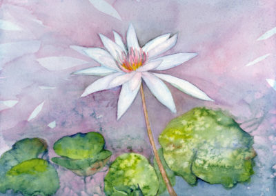 White Water Lily  20x16
