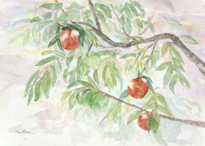 Peaches  14x11